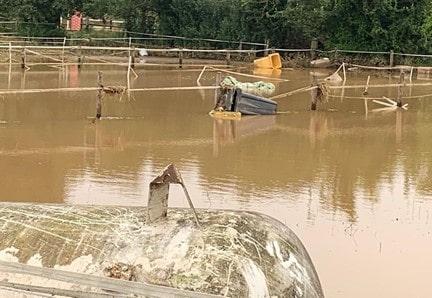 Hochwasser Hilfe Pferde
