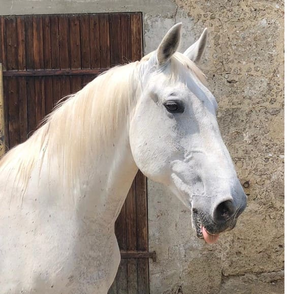 Lupo Pferdehilfe, möhrchengeber