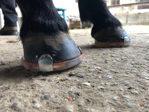 Sneaker Kuki Pferde