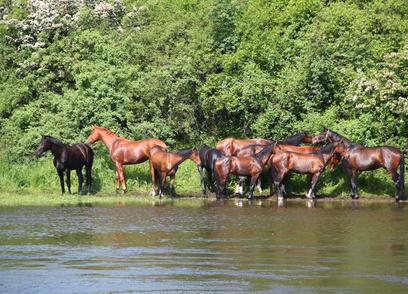 Hochwasser – Hilfe für Pferde und Pferdebesitzer