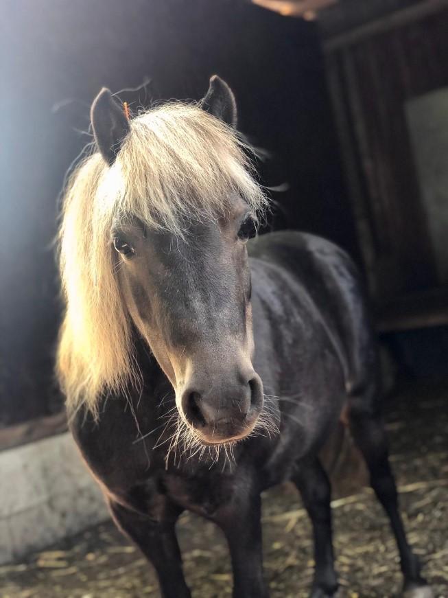 Pferde retten - Annie Ankunft