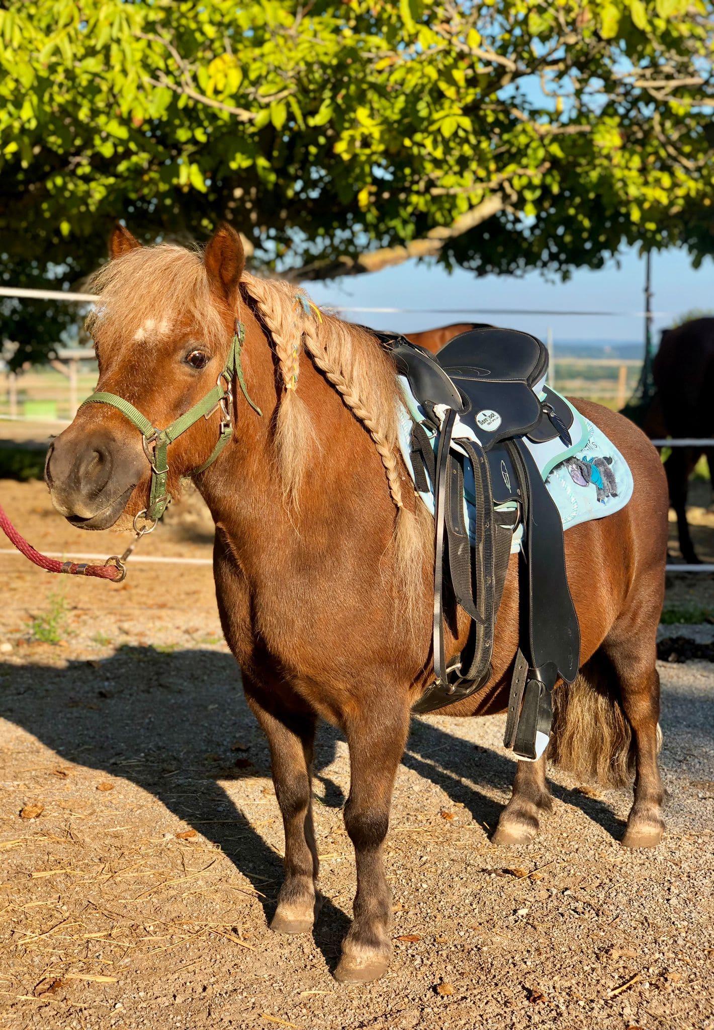 Pferde in Not-Ausrüstung Check