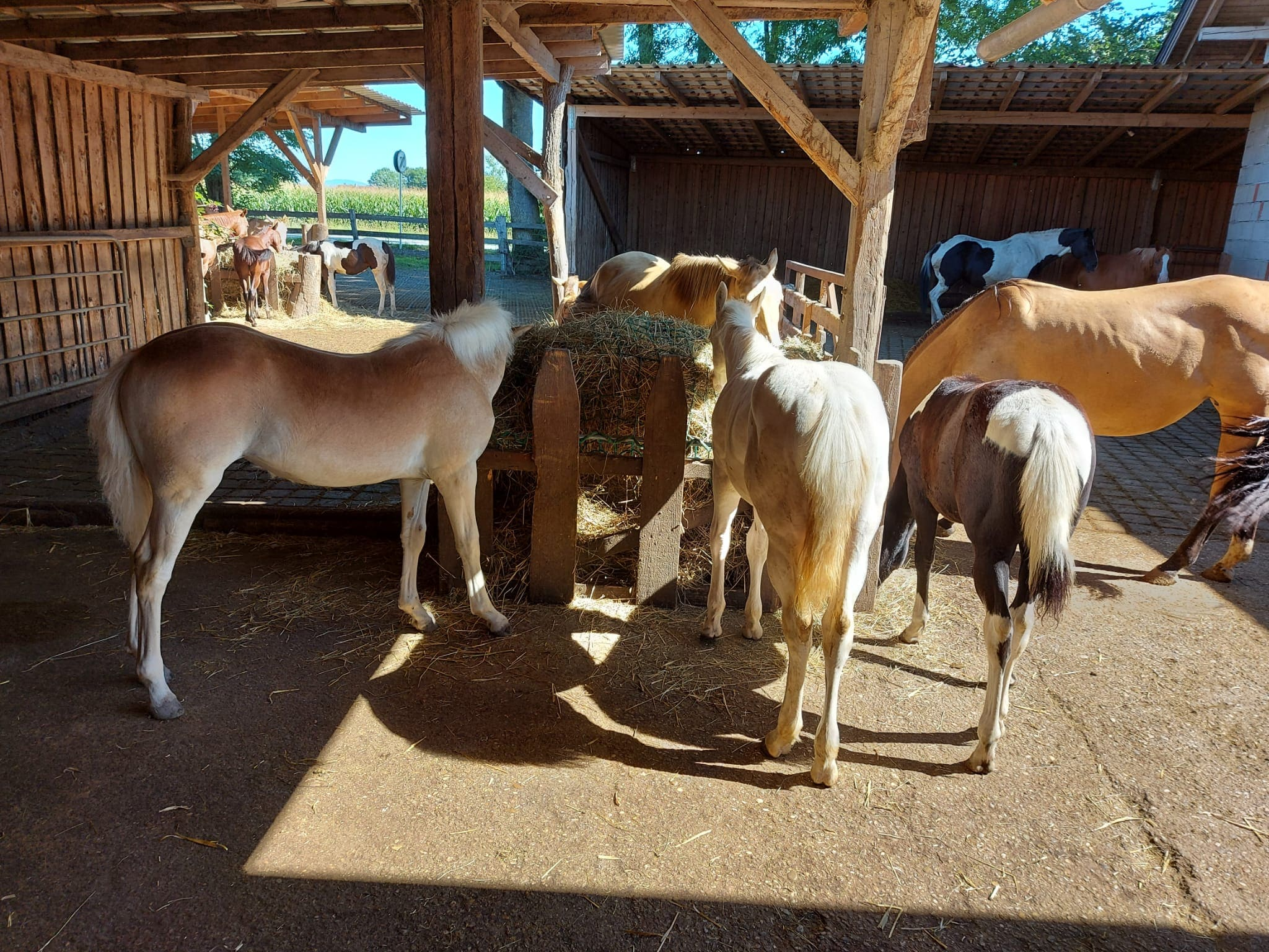 Not Pferde-Ersatzfamilie