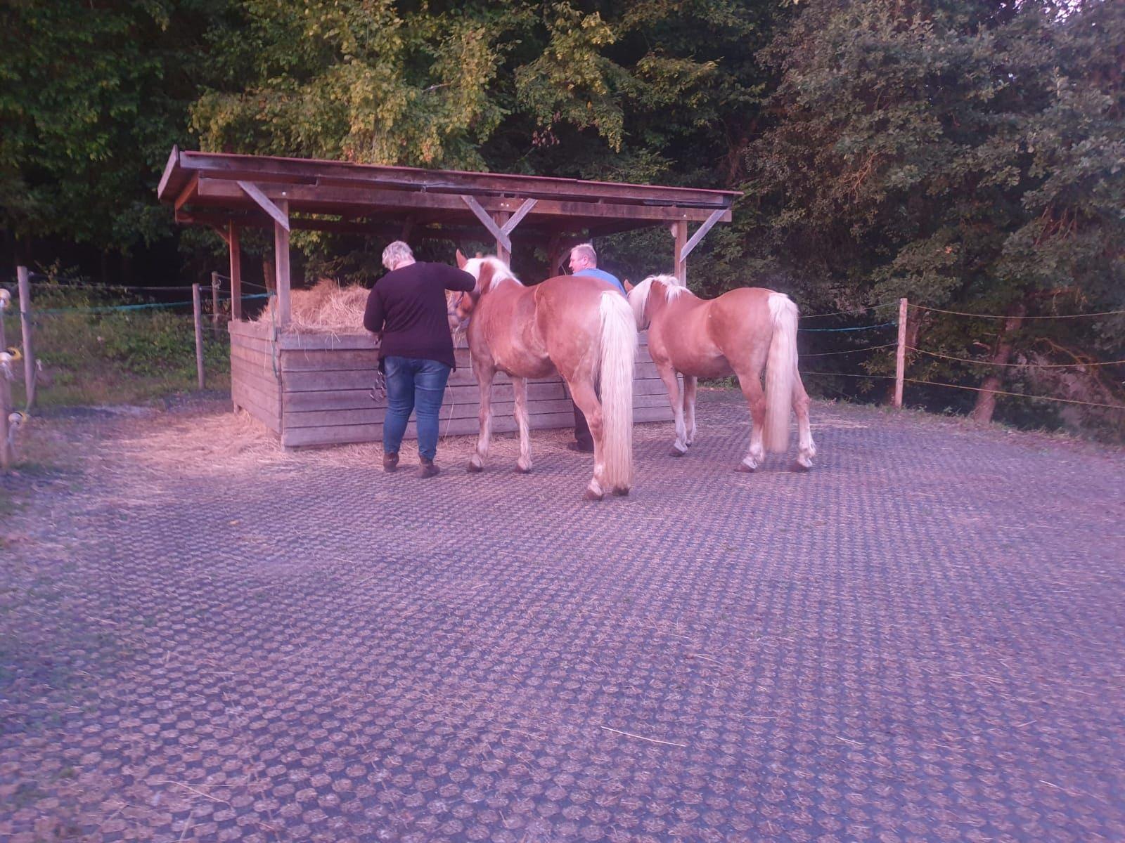 Pferde suchen Zuhause