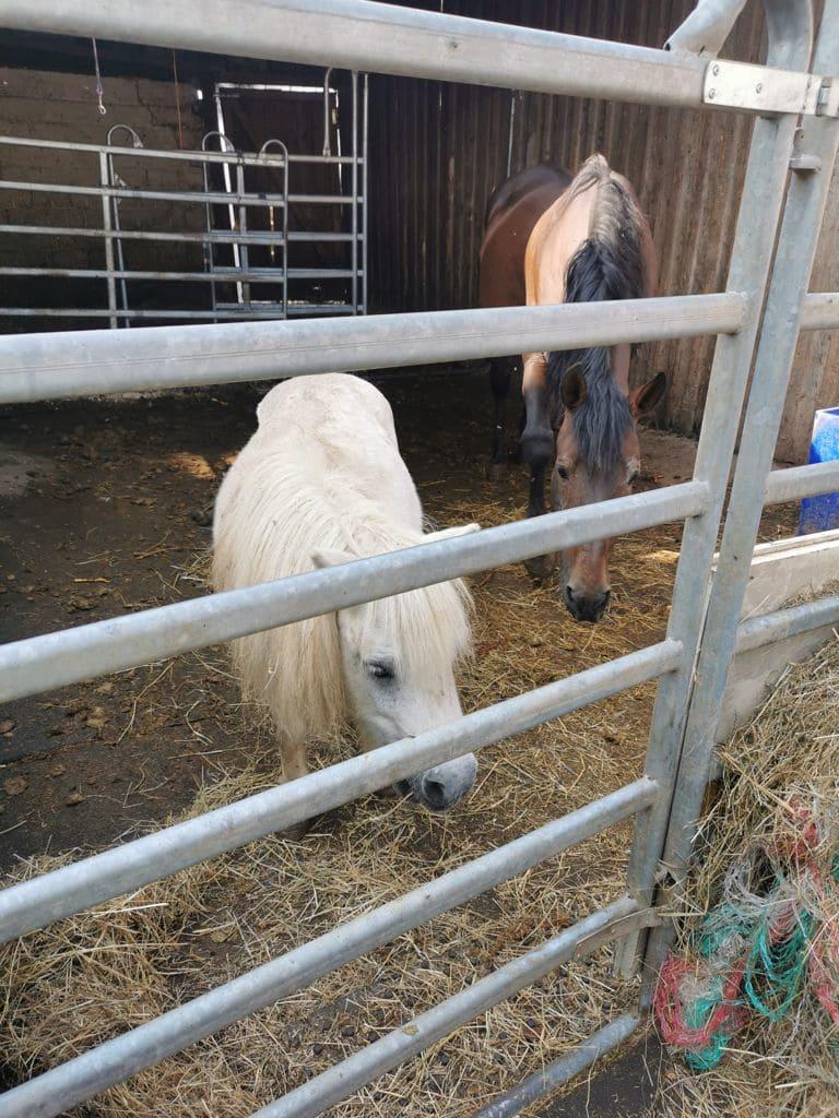 moehrchengeber-soforthilfe pferde