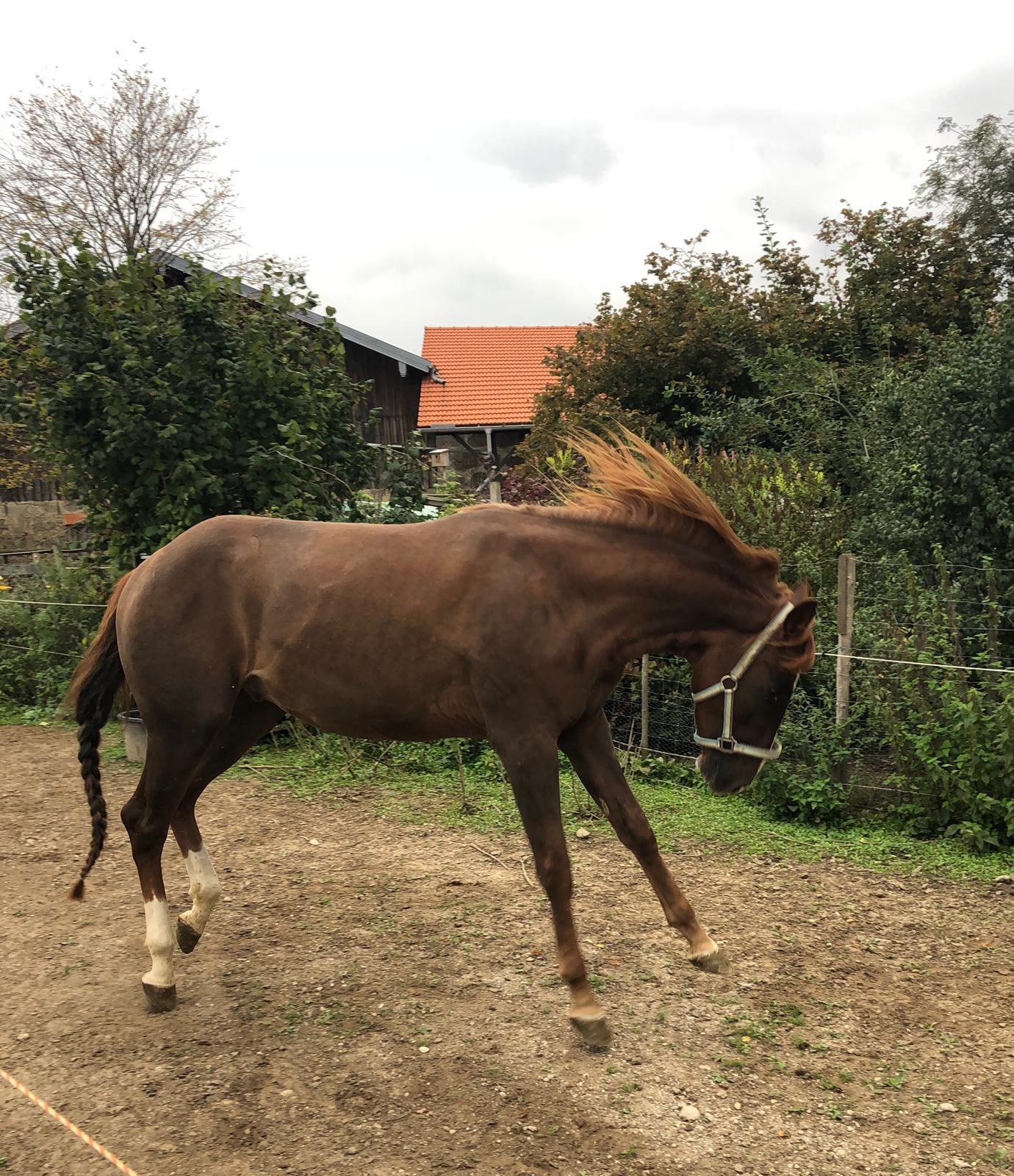Pferde helfen, freude vermitteln