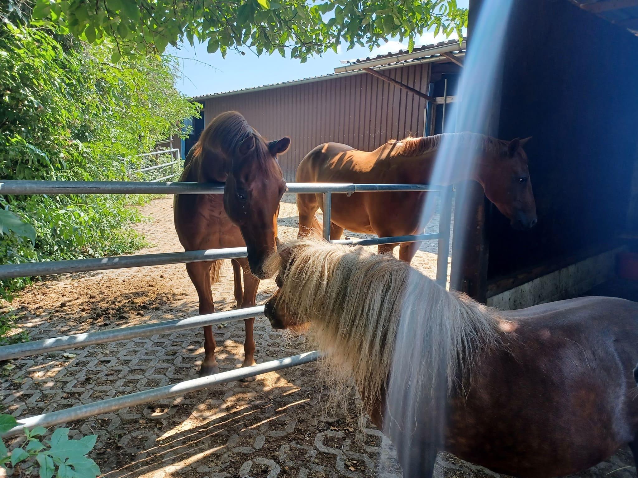 moehrchengeber, hilfe-für-pferde